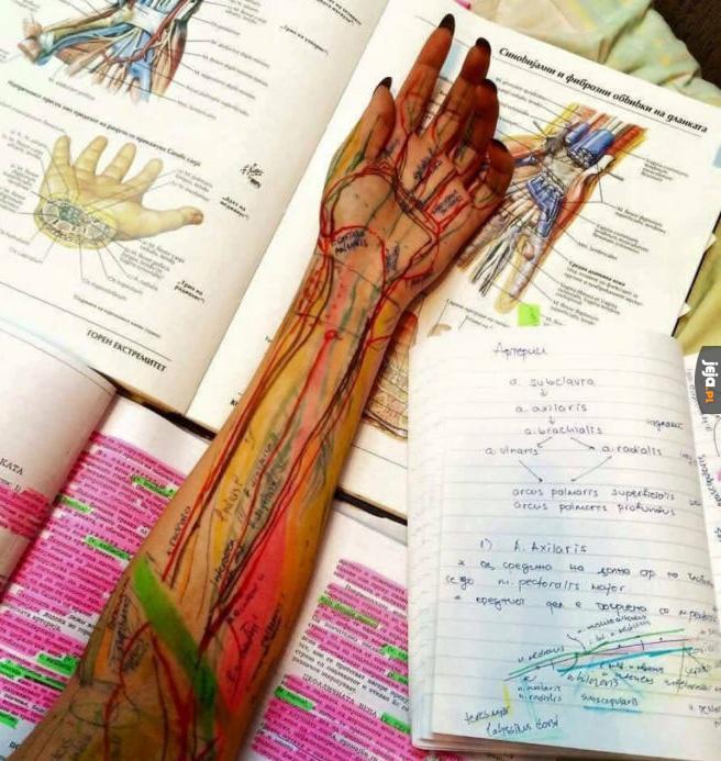 Gdy znudzi ci się wkuwanie na egzamin z anatomii