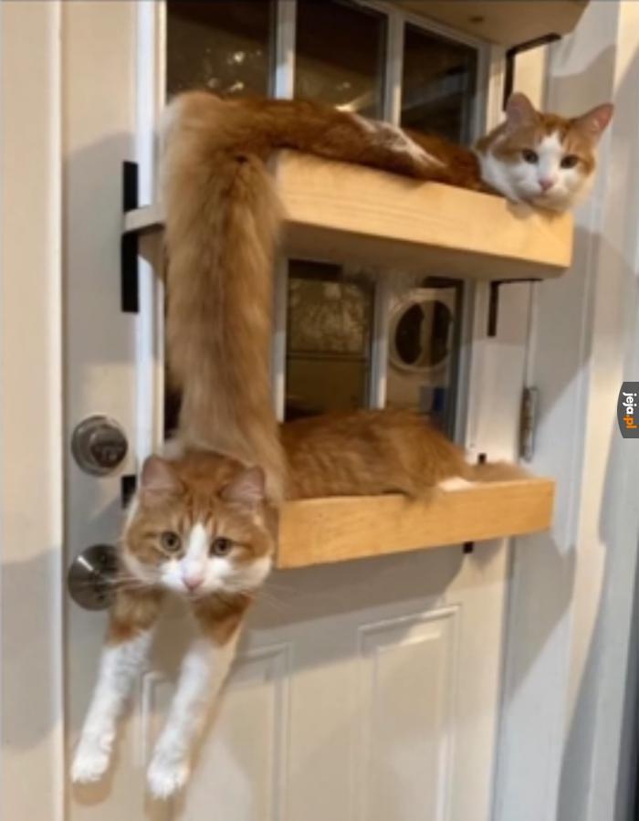 Koty są cieczą