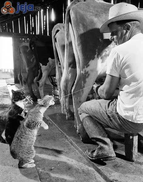 Świeże mleczko