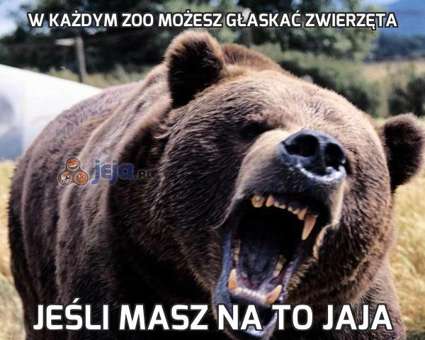 W każdym zoo możesz głaskać zwierzęta