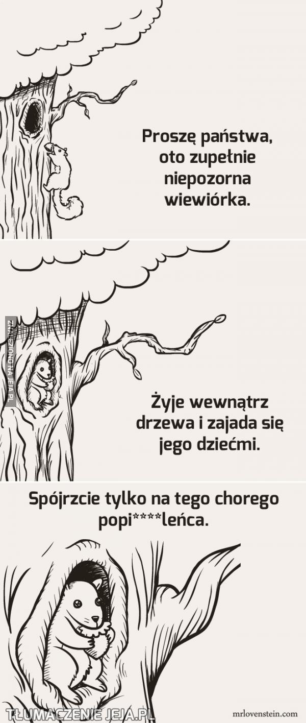 Niepozorna wiewiórka