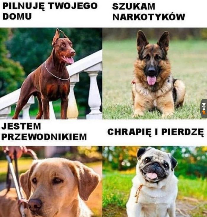 Rasy psów