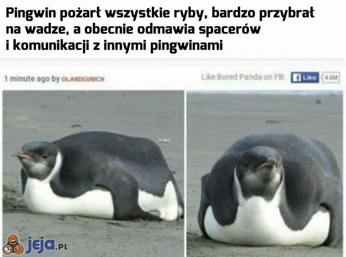 Gdybym był pingwinem