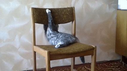 Mistrz akrobacji na krześle