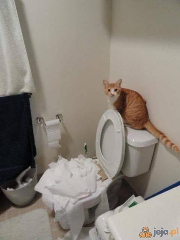Kicia pomaga w sprzątaniu, jak tylko potrafi najlepiej