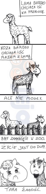 Lama i koza