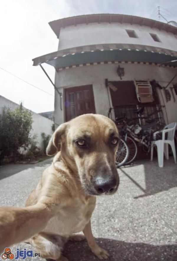 Sweet focia w wykonaniu psa