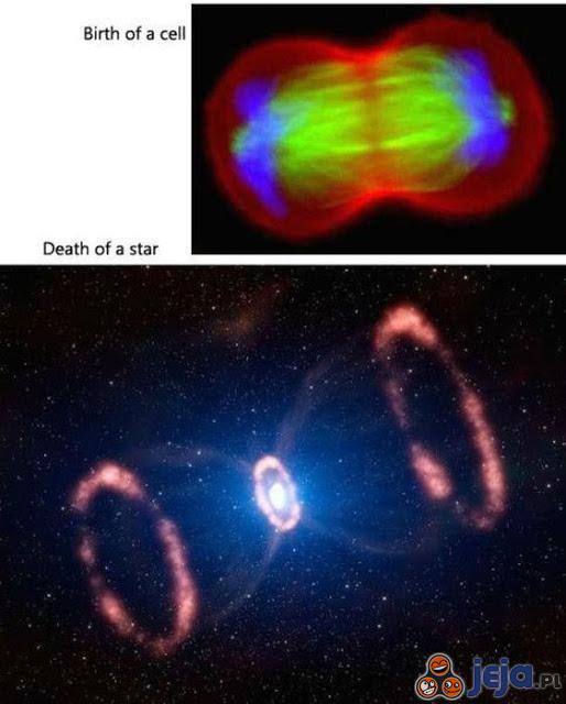 Narodziny komórki, a śmierć gwiazdy