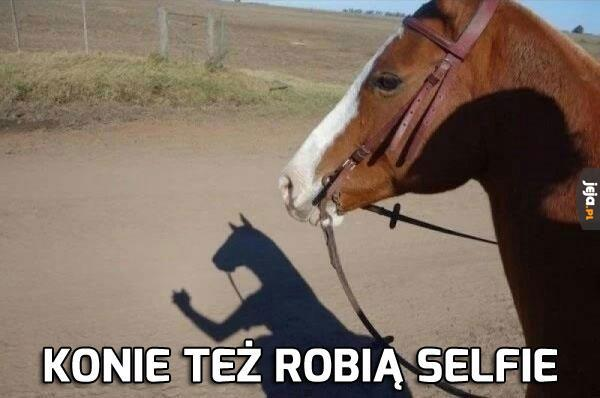 Końskie selfie
