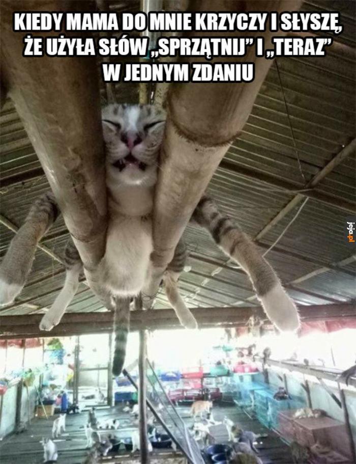 Włączam tryb ninja