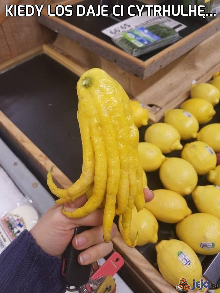 Niecodzienna cytryna