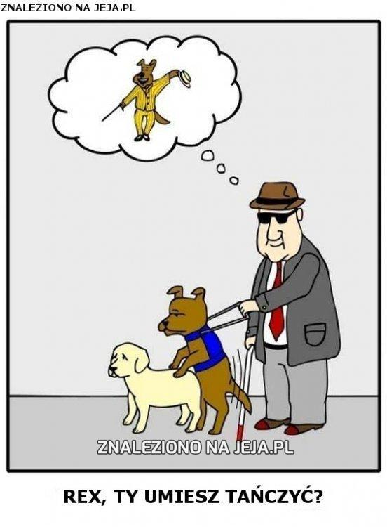 Rex - pies przewodnik