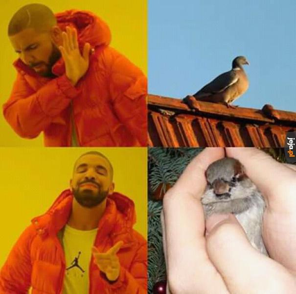 Gołąb na dachu? Nie, dziękuję!