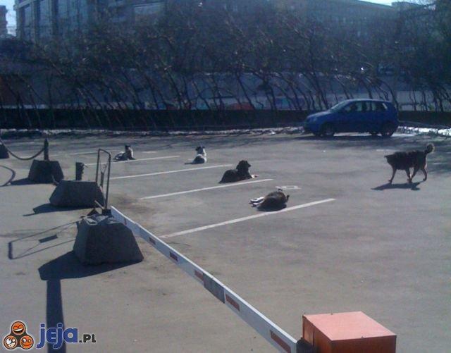 Psi parking