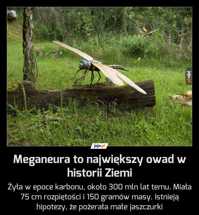 A ty boisz się komara...