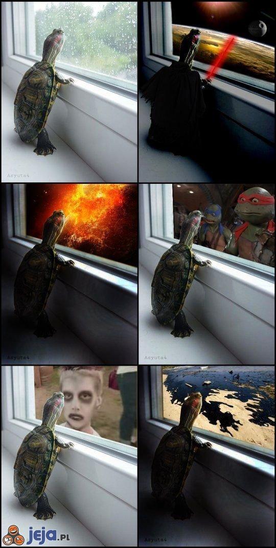 Marzenia żółwia