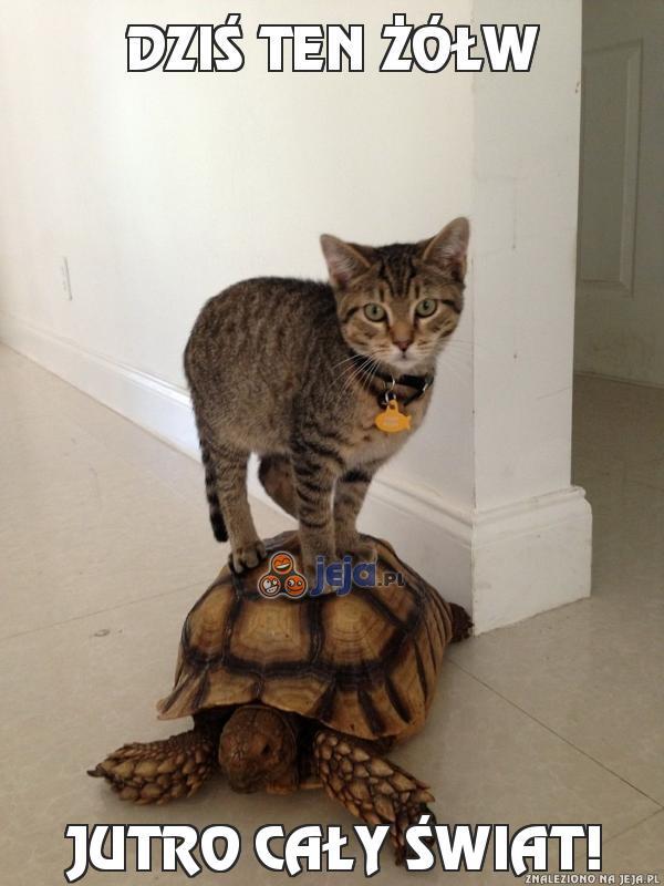 Dziś ten żółw