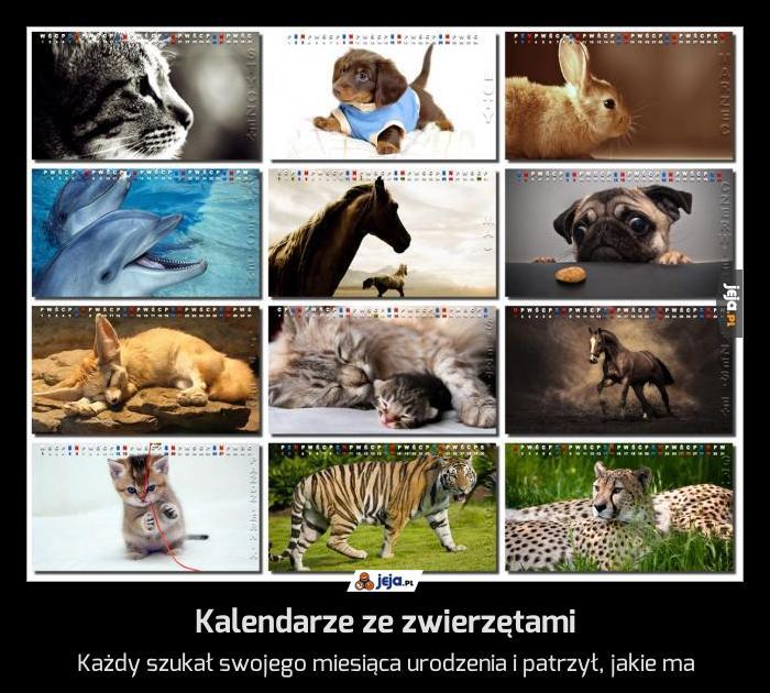 Kalendarze ze zwierzętami
