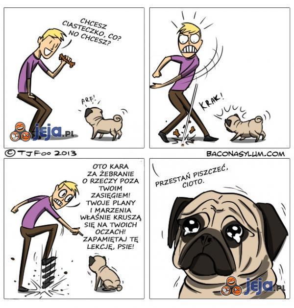 Z psami trzeba twardo, nie ma co