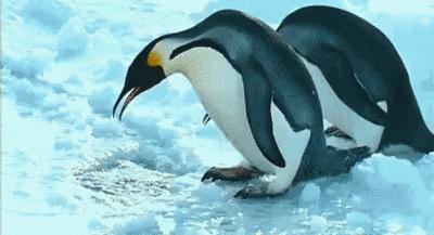 Dwa pingwiny... Jedna dziura...