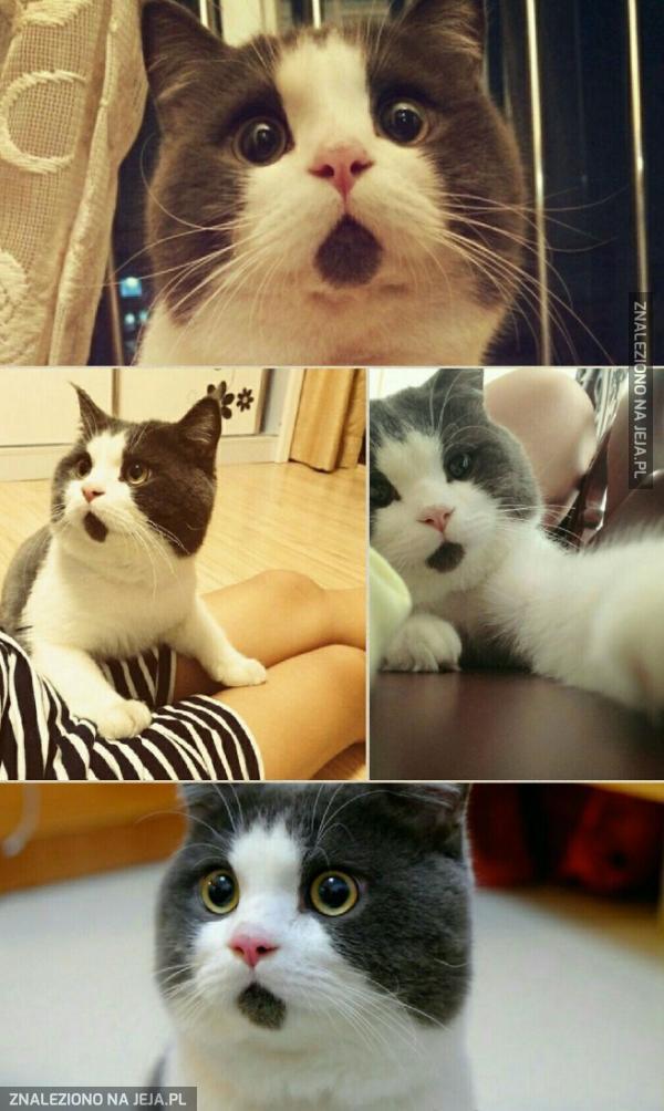 Najsłodszy koci pyszczek