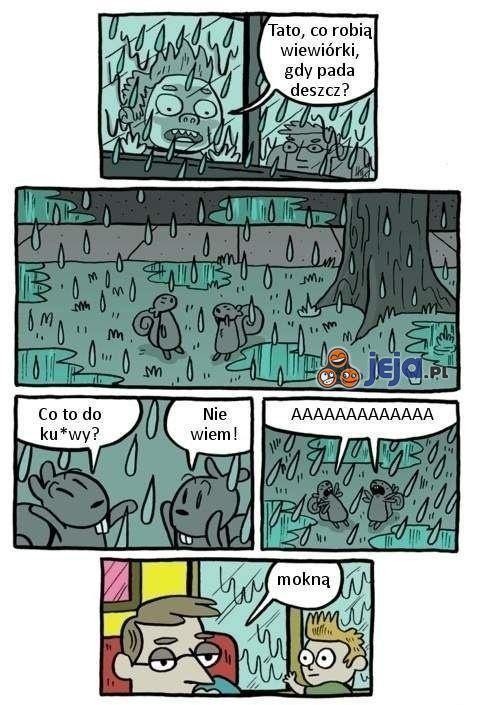 Wiewiórki w deszczu
