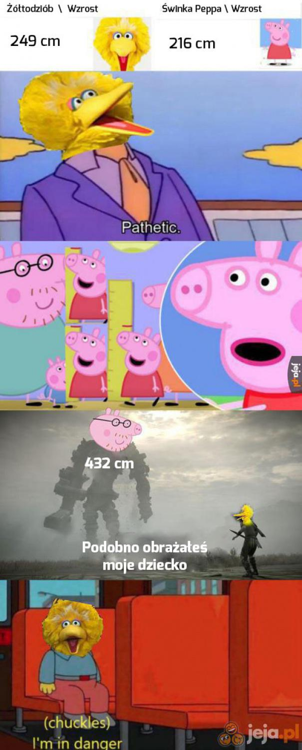 Tata świnka jest POTĘŻNY