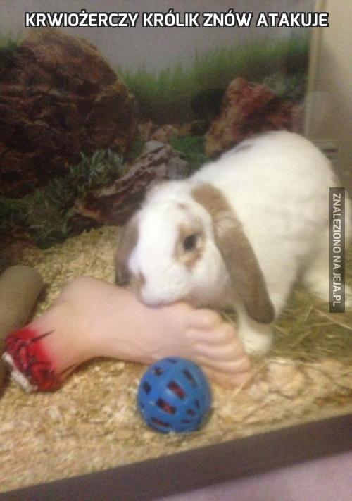Krwiożerczy królik znów atakuje