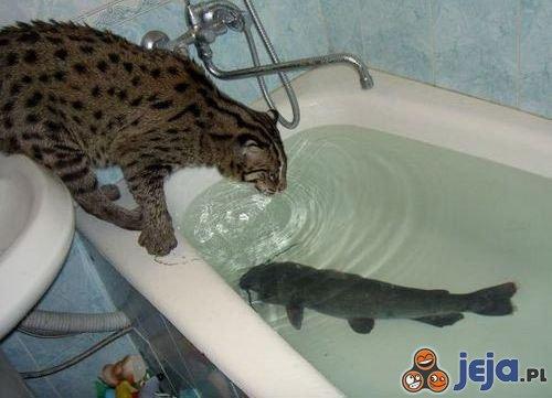 Akcja wyjąć rybę