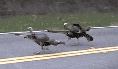 Straż zwierzęca w drodze!