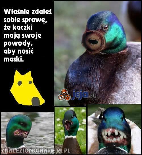 Mroczna tajemnica kaczek