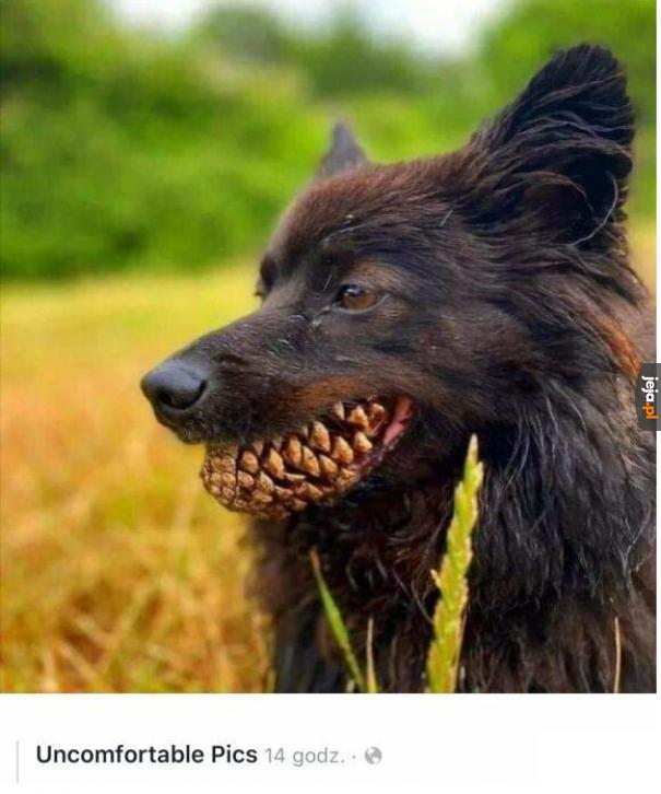 Pies harcerza
