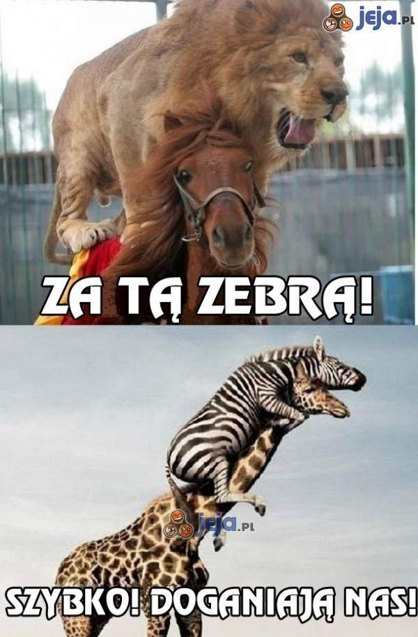 W pogoni za zebrą