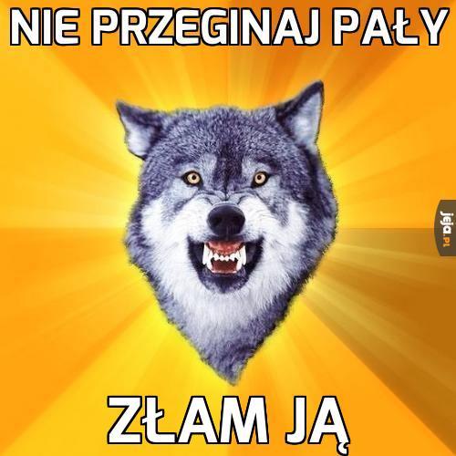 Wilk radzi