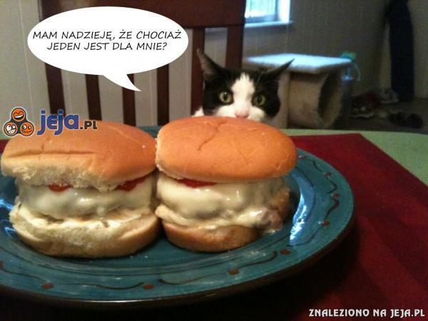 Koty wiedzą co dobre