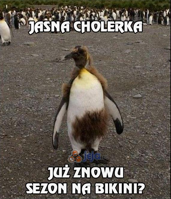 Pingwinia zmiana sezonu