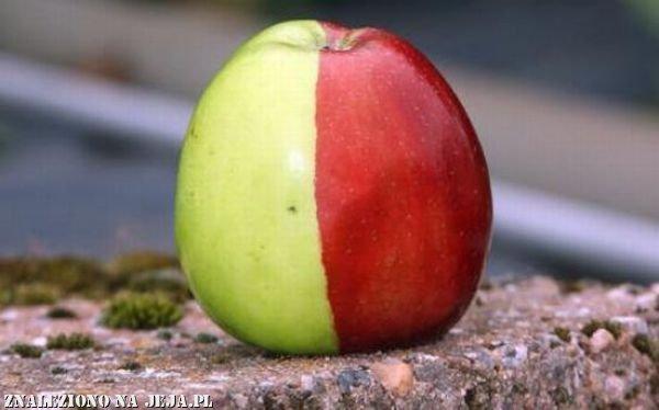 Prawda czy fałsz? - jabłko