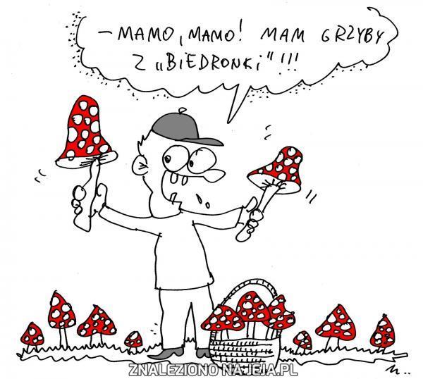 Muchomory z Biedronki