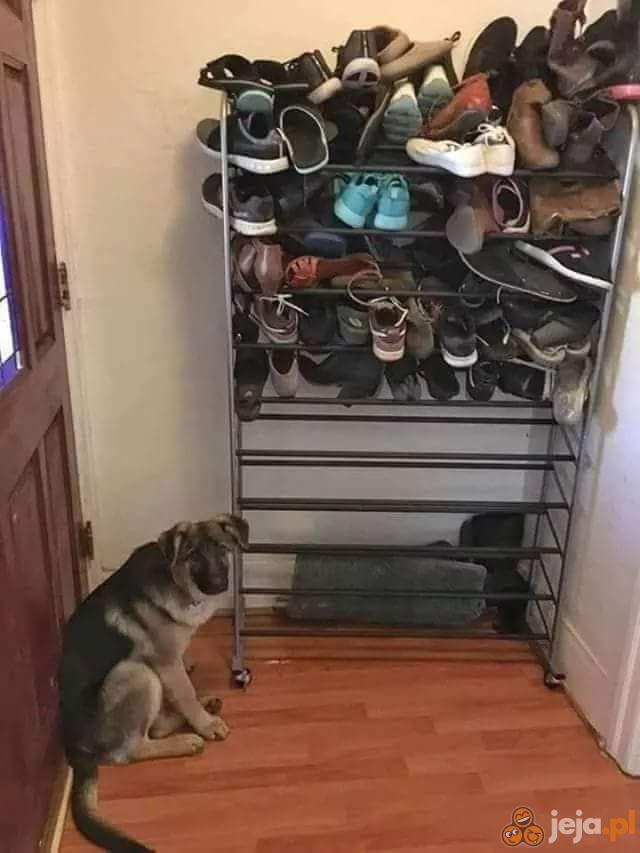 Skończyło się gryzienie butów