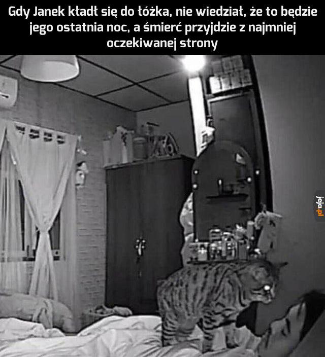 Dlatego zawsze daje się kotu jeść przed pójściem spać