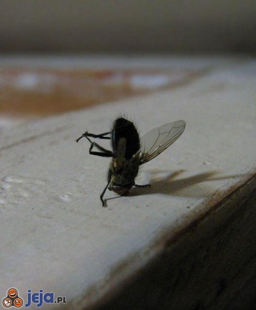 Breakdance w wykonaniu muchy