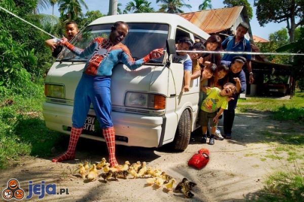 Spiderman uratował małe kurczaki!