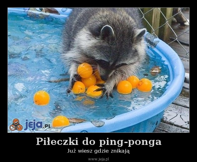 Piłeczki do ping-ponga