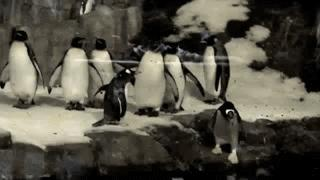 Pingwin i teleportacja