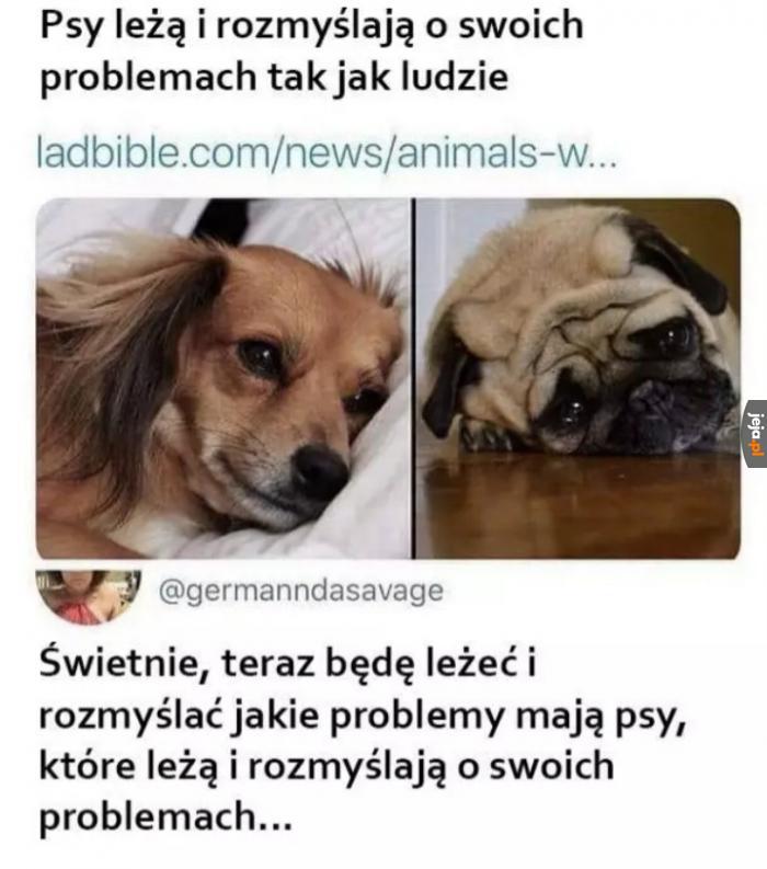 Psia melancholia