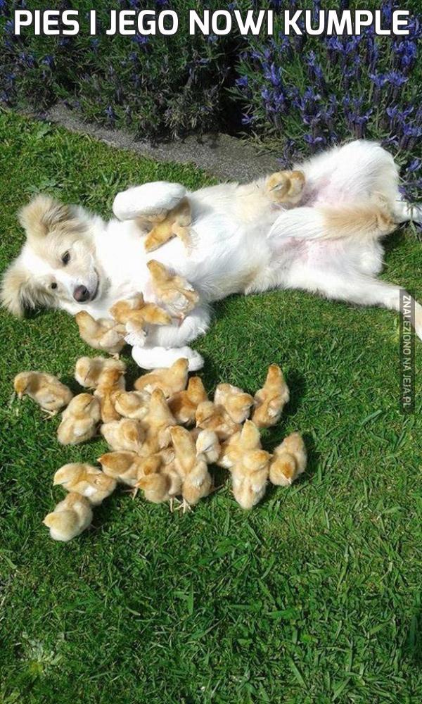 Pies i jego nowi kumple