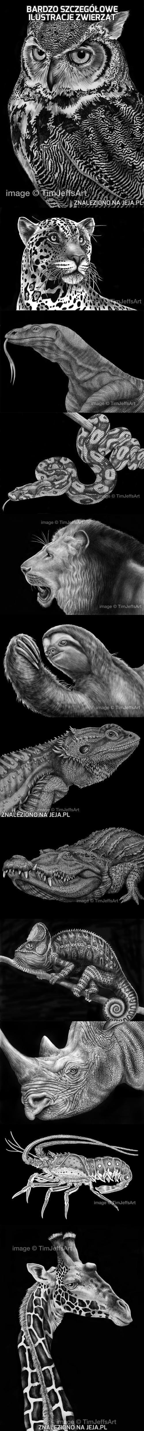 Bardzo szczegółowe ilustracje zwierząt