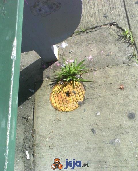 Prawie ananas