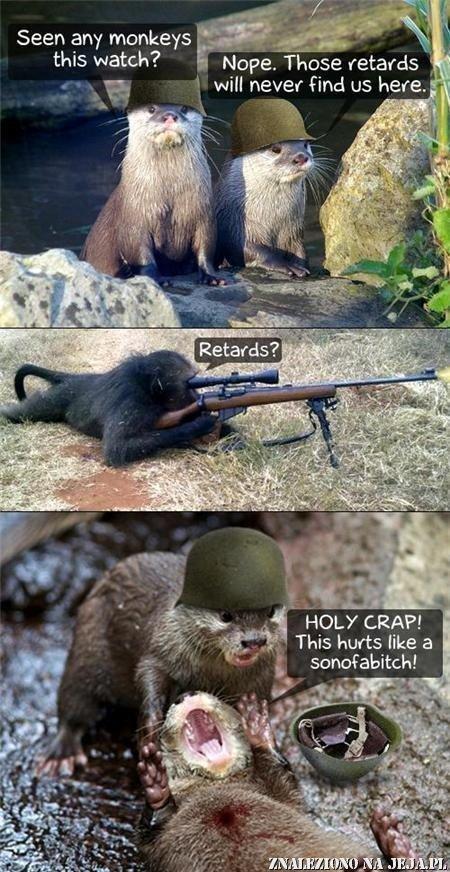 Świstaki vs małpy