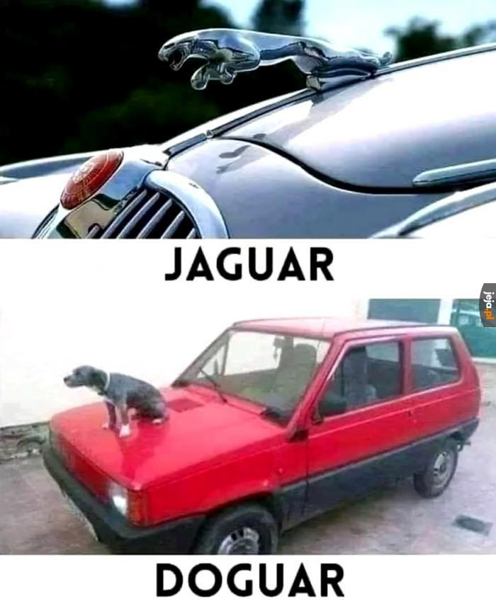 Jedyny samochód ze zwierzęciem na masce, na jaki mnie stać